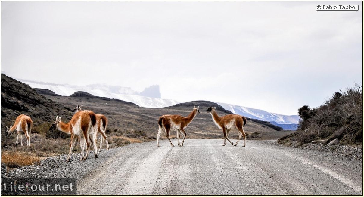 Fabio_s-LifeTour---Chile-(2015-September)---Torres-del-Paine---Lama-Crossing---11455 cover