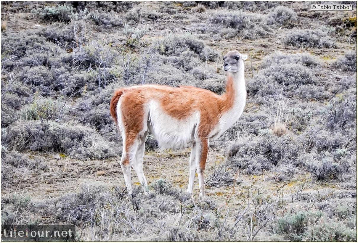 Fabio_s-LifeTour---Chile-(2015-September)---Torres-del-Paine---Lama-Crossing---11460