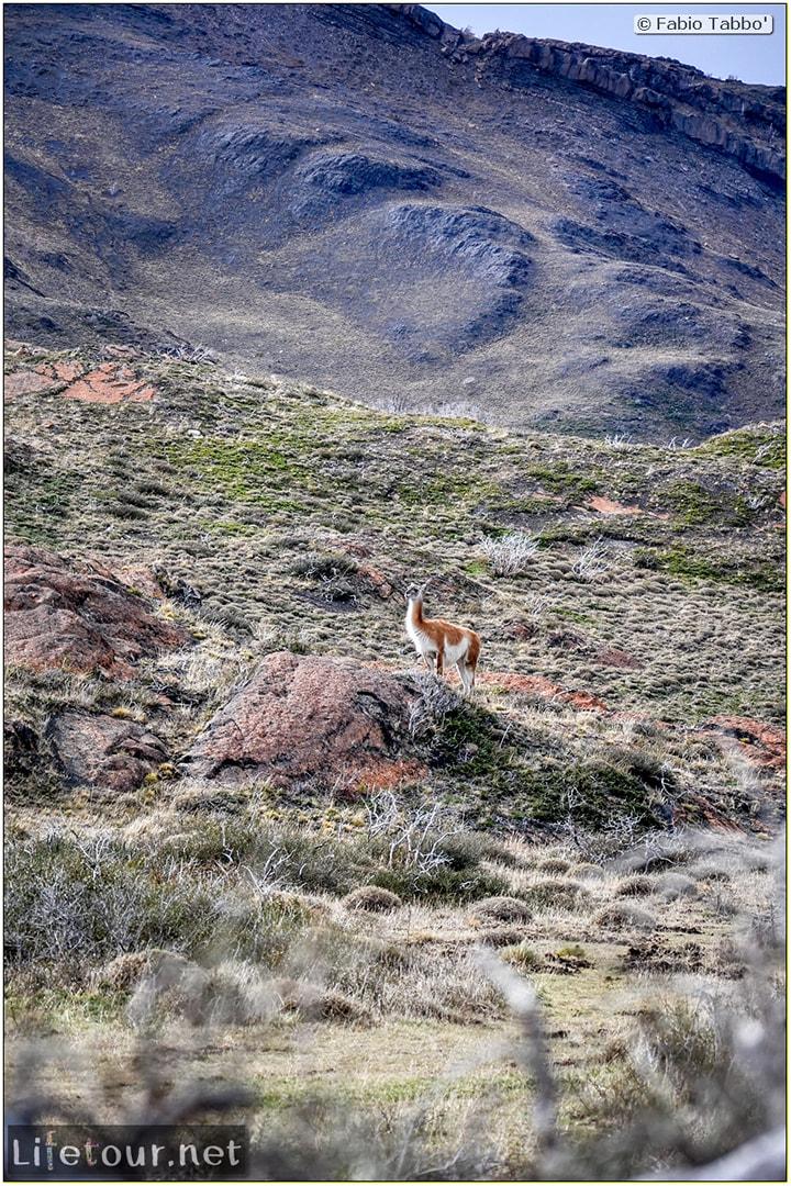 Fabio_s-LifeTour---Chile-(2015-September)---Torres-del-Paine---Lama-Crossing---12106
