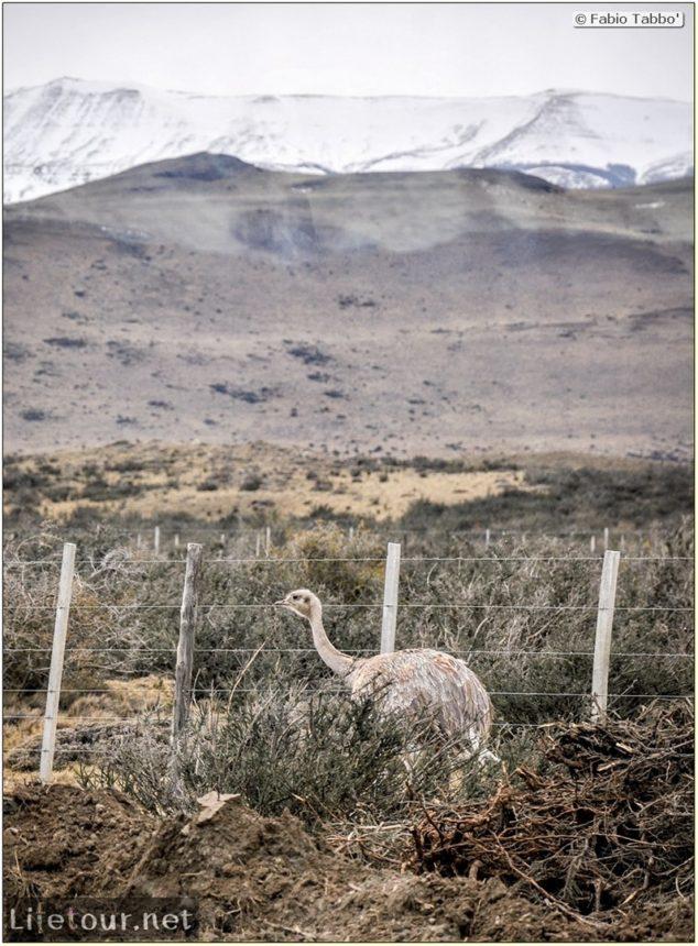 Fabio_s-LifeTour---Chile-(2015-September)---Torres-del-Paine---Lama-Crossing---9939