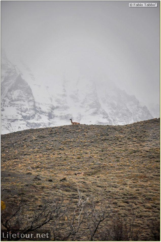 Fabio_s-LifeTour---Chile-(2015-September)---Torres-del-Paine---Other-pictures-trekking-Torres-del-Paine---11499