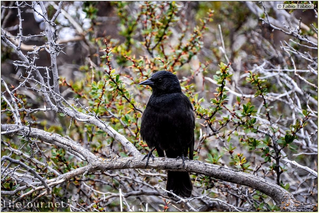 Fabio_s-LifeTour---Chile-(2015-September)---Torres-del-Paine---Serrano-river-tourist-village---12289