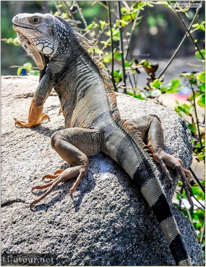 Fabio_s-LifeTour---Colombia-(2015-January-February)---Santa-Marta---Tayrona-park---Feeding-iguanas---5967