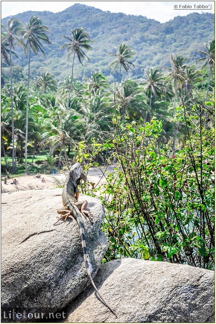 Fabio_s-LifeTour---Colombia-(2015-January-February)---Santa-Marta---Tayrona-park---Feeding-iguanas---6196
