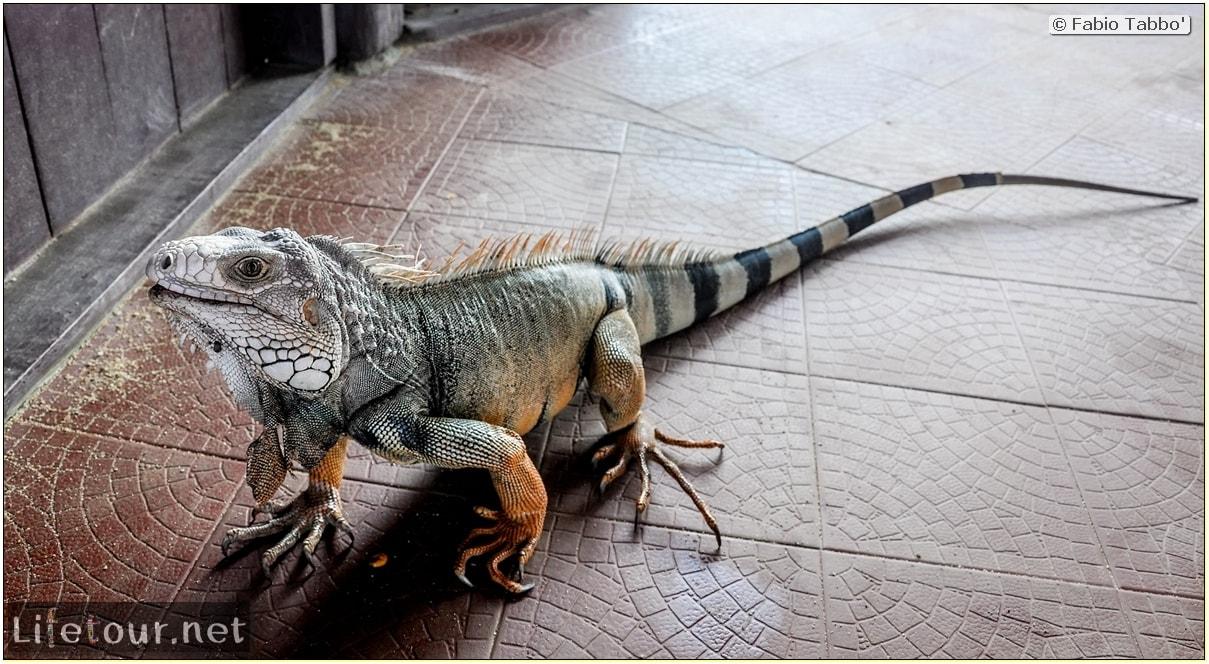 Fabio_s-LifeTour---Colombia-(2015-January-February)---Santa-Marta---Tayrona-park---Feeding-iguanas---7758 COVER