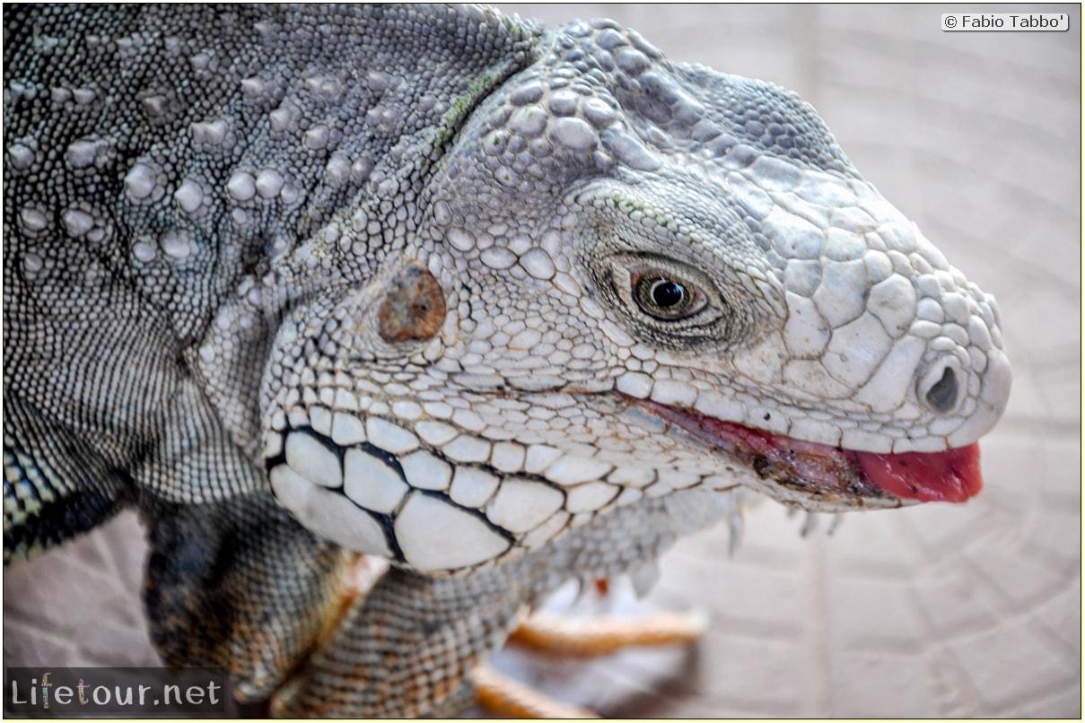 Fabio_s-LifeTour---Colombia-(2015-January-February)---Santa-Marta---Tayrona-park---Feeding-iguanas---7867