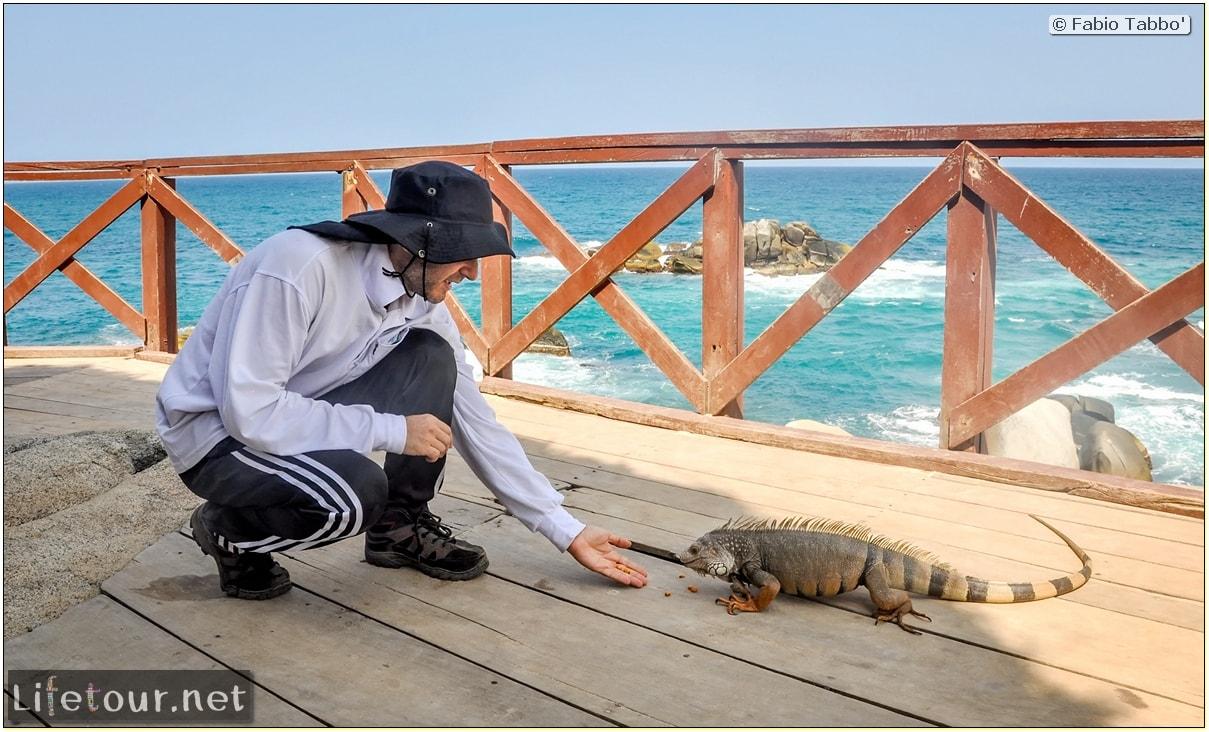 Fabio_s-LifeTour---Colombia-(2015-January-February)---Santa-Marta---Tayrona-park---Feeding-iguanas---8073 COVER