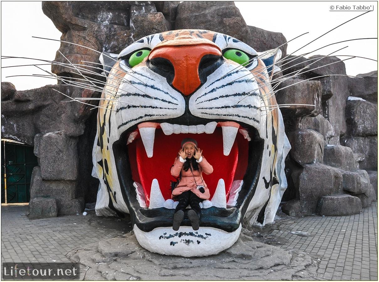 Fabio's LifeTour - China (1993-1997 and 2014) - Harbin (2014) - Siberian Tiger Park - 5124