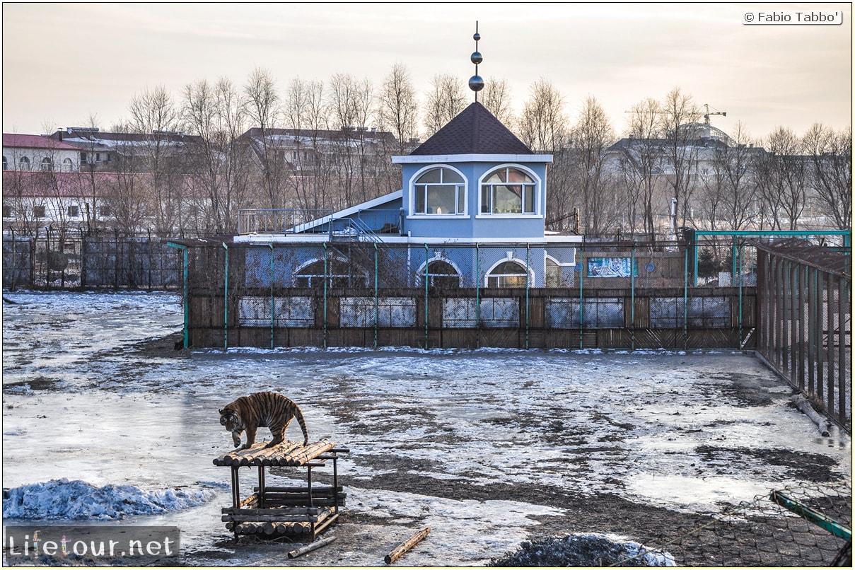 Fabio's LifeTour - China (1993-1997 and 2014) - Harbin (2014) - Siberian Tiger Park - 6921