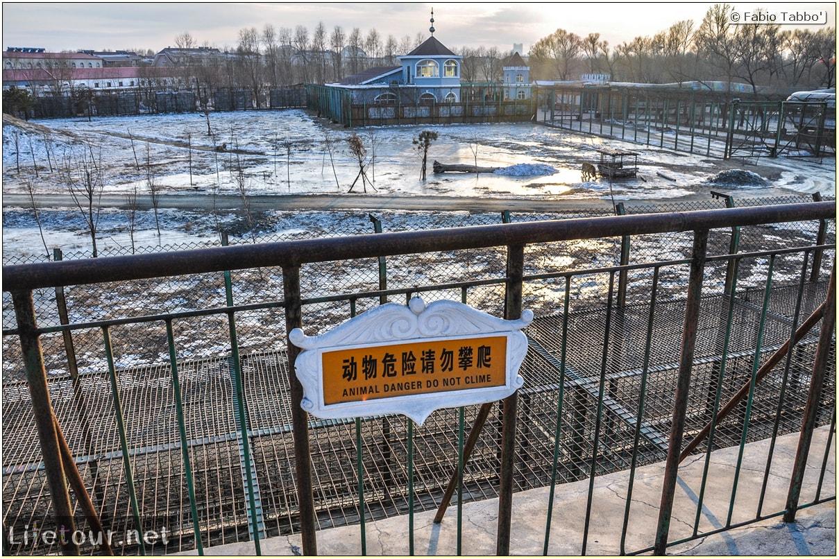 Fabio's LifeTour - China (1993-1997 and 2014) - Harbin (2014) - Siberian Tiger Park - 7249