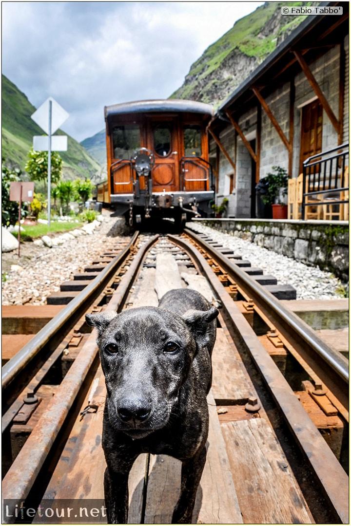 Fabio_s-LifeTour---Ecuador-(2015-February)---Alausi---El-Nariz-del-Diablo-(steam-train-ride)---12393 COVER
