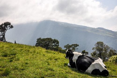 Fabio_s-LifeTour---Ecuador-(2015-February)---Banos---Casa-de-Arbol---11820 COVER
