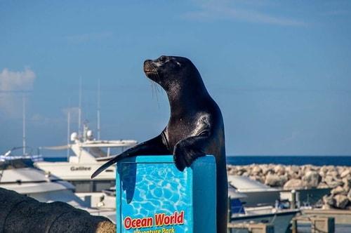 Dominican-Republic-Puerto-Plata-Ocean-World-SEA-LION-8792 COVER