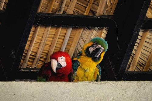 Dominican-Republic-Sosua-Monkey-Jungle-Birds-1664 COVER