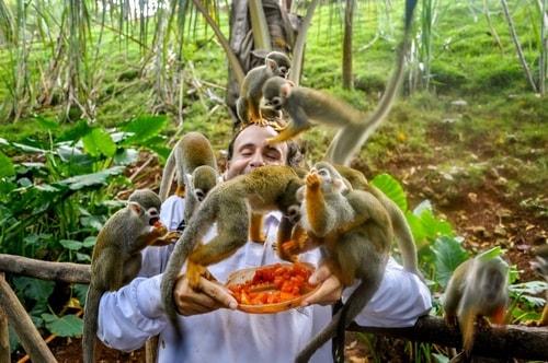 Dominican-Republic-Sosua-Monkey-Jungle-Monkey-Feeding-10868 COVER