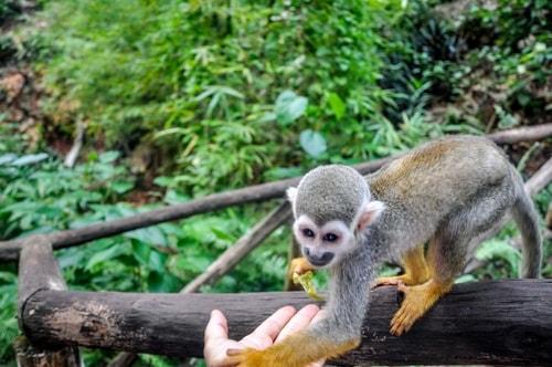 Dominican-Republic-Sosua-Monkey-Jungle-Monkey-Feeding-12061 COVER