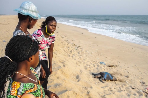 Ghana -Greater Accra-Ada Foah-Beach and turtles sighting-782 COVER