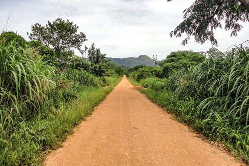 Ghana -Volta Region-Tafi Atome Monkey Sanctuary-963 COVER