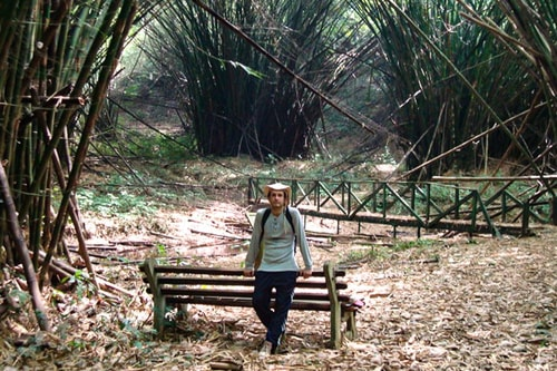 Ghana -Western region-Ankasa Conservation Area-Bamboo Cathedral-1232 COVER