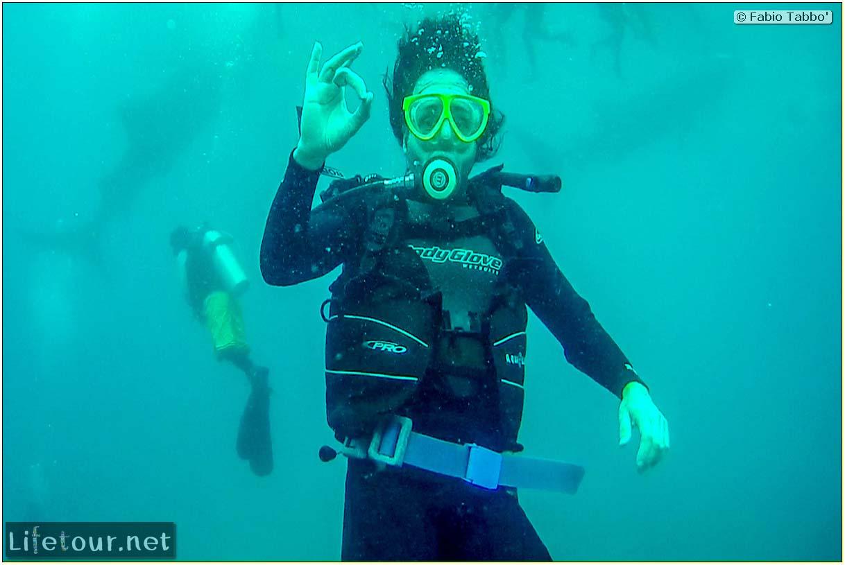 Cebu-Island-Oslob-Scuba-Diving-with-whale-sharks-Scuba-diving-with-whale-sharks-17