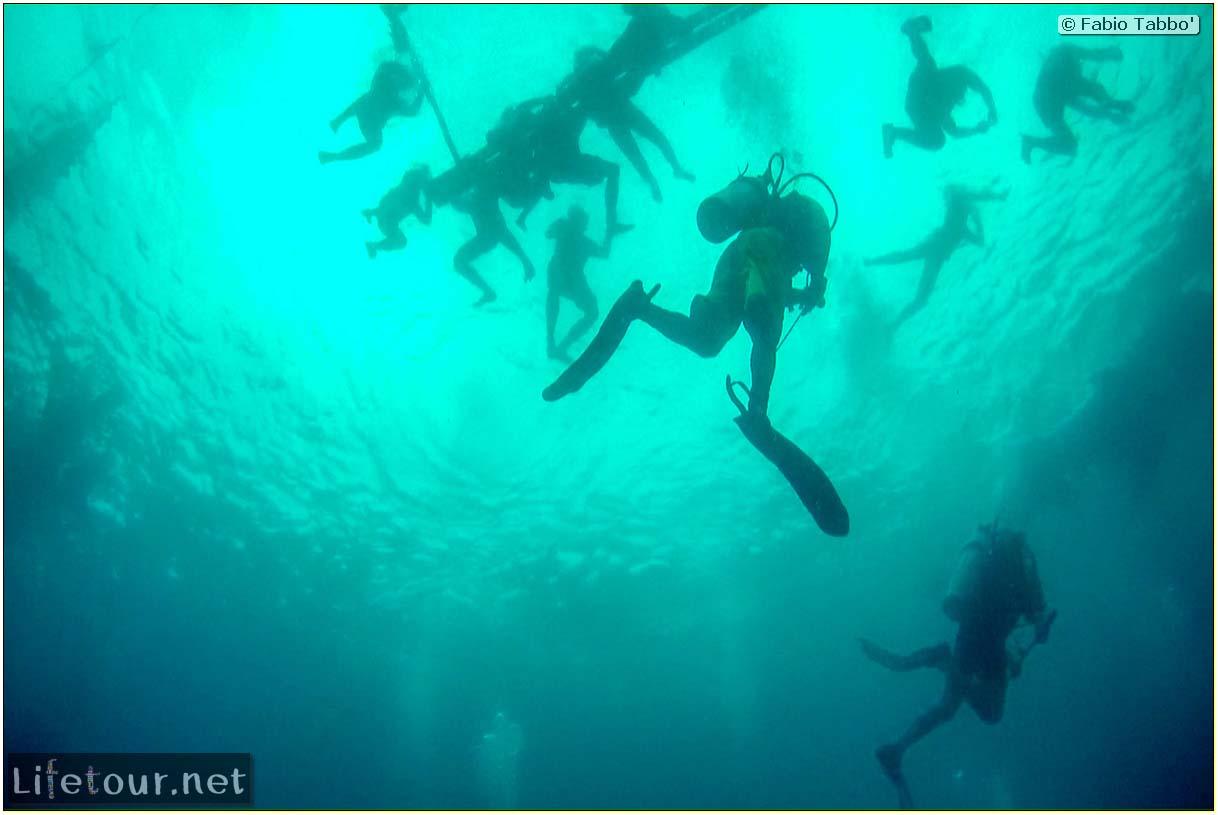 Cebu-Island-Oslob-Scuba-Diving-with-whale-sharks-Scuba-diving-with-whale-sharks-2