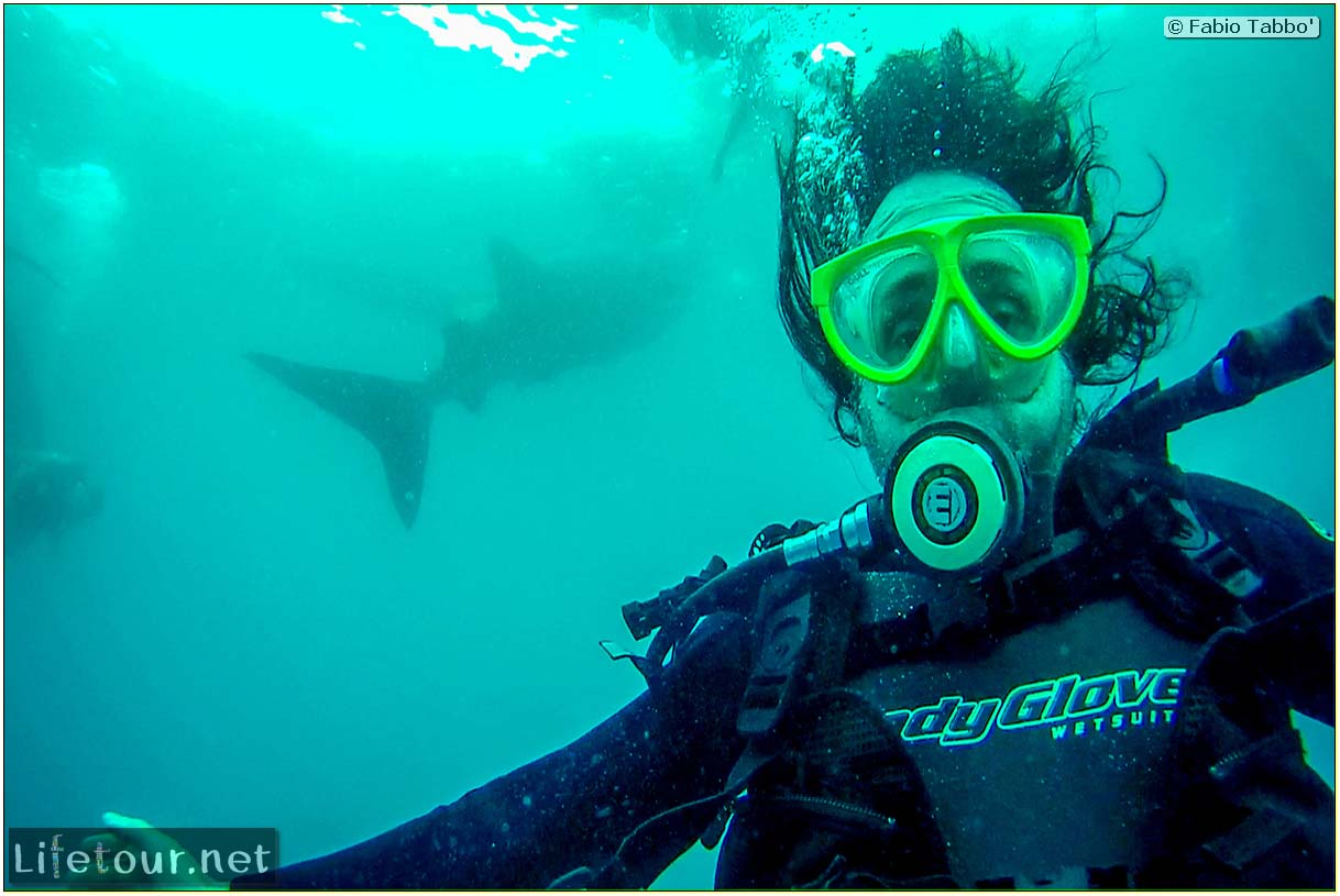 Cebu-Island-Oslob-Scuba-Diving-with-whale-sharks-Scuba-diving-with-whale-sharks-25