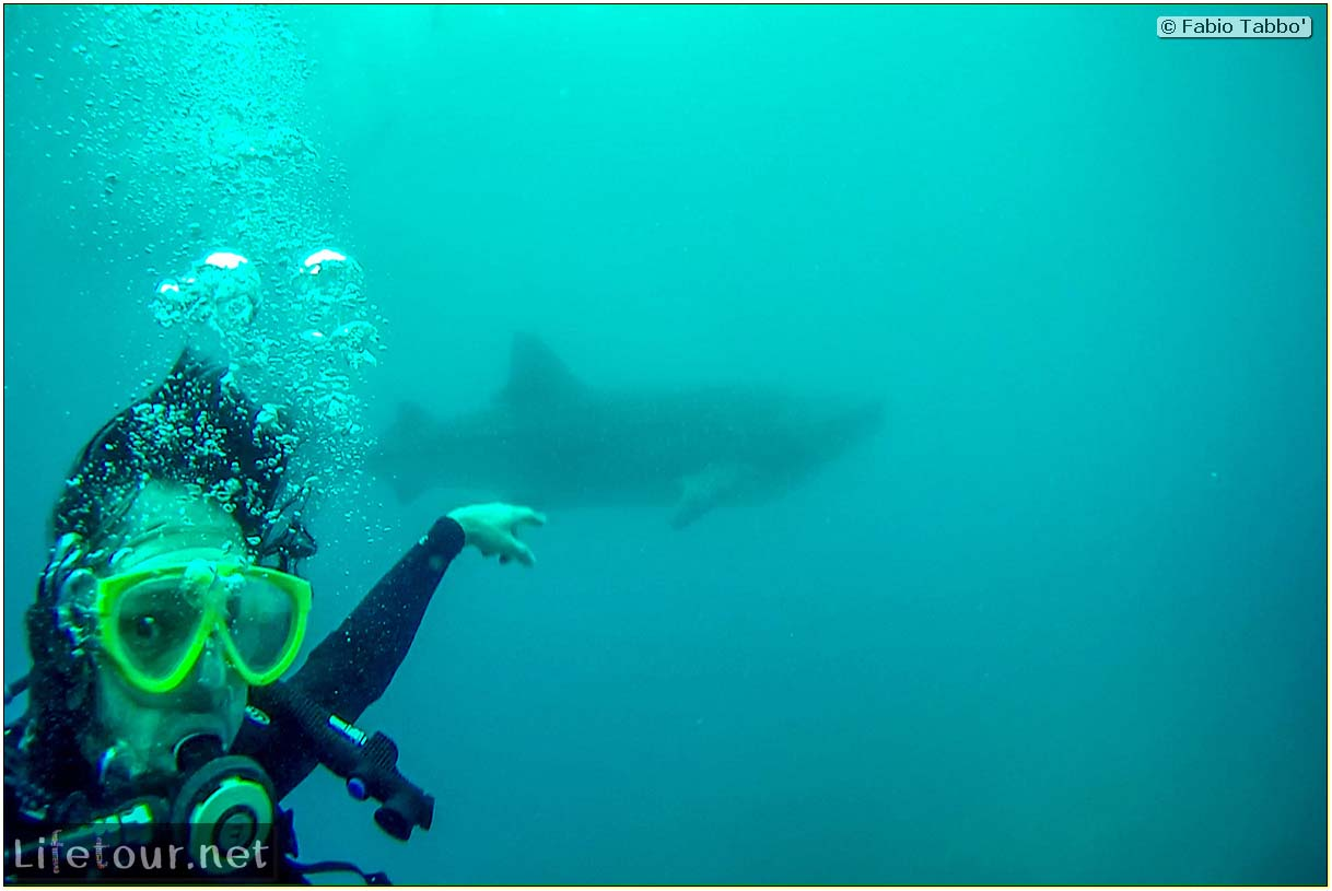Cebu-Island-Oslob-Scuba-Diving-with-whale-sharks-Scuba-diving-with-whale-sharks-48
