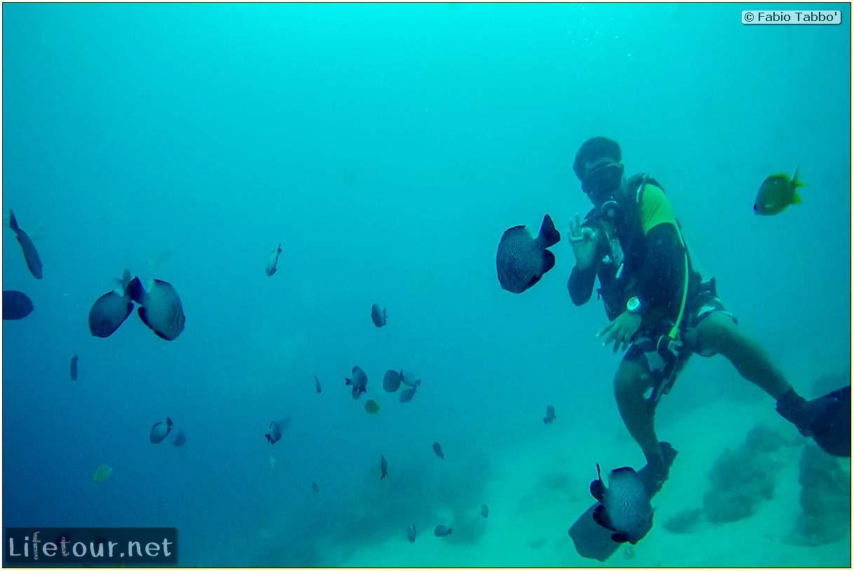 Cebu-Island-Oslob-Scuba-Diving-with-whale-sharks-Scuba-diving-with-whale-sharks-62