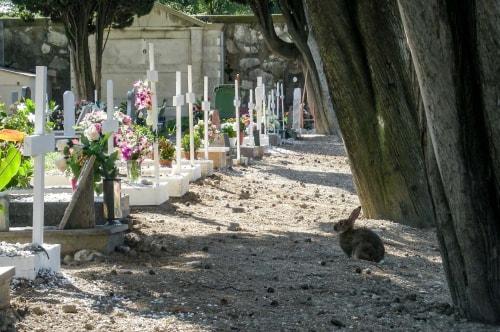 Italy -Veneto-Venice-Murano-Murano Cemetery-14376 COVER