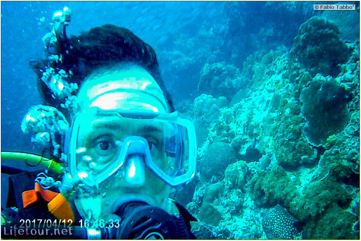 Moalboal-Sardines-run-Scuba-diving-with-millions-of-sardines-115
