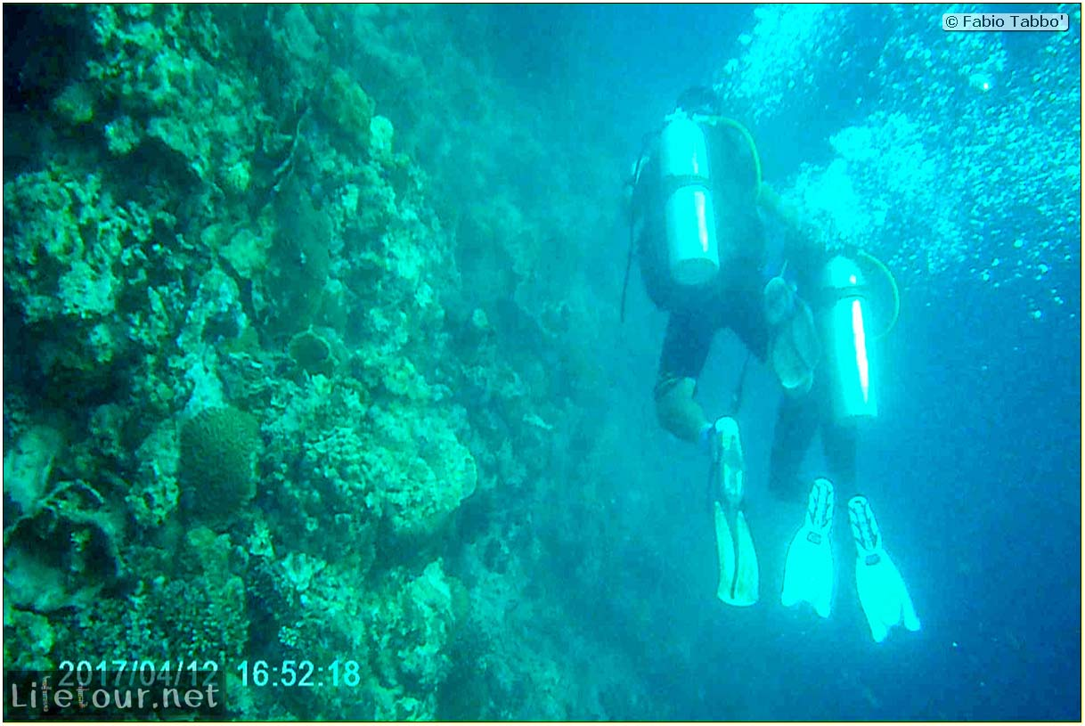 Moalboal-Sardines-run-Scuba-diving-with-millions-of-sardines-165