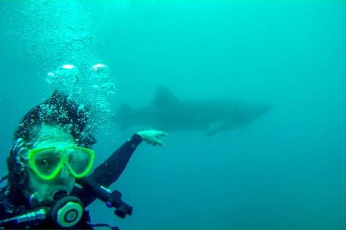 Philippines-Cebu-Island-Oslob-Scuba-Diving-with-whale-sharks-Scuba-diving-with-whale-sharks-48 COVER