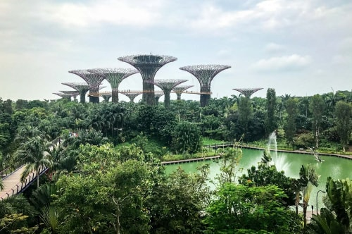 Singapore-Gardens-by-the-Bay-SuperTree-Grove-17833 COVER