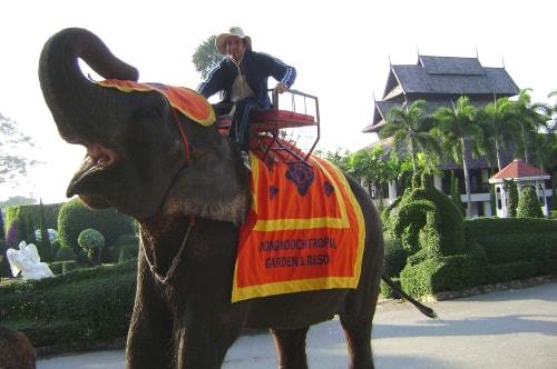 Thailand-pattaya-Tourism-Nong Nooch Tropical Botanical Garden-Elephants show-1253 COVER