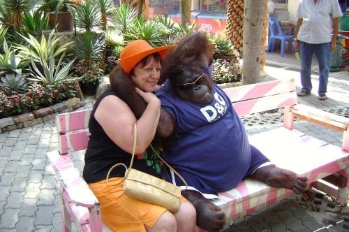 Thailand-pattaya-Tourism-Nong Nooch Tropical Botanical Garden-Petting zoo-1288 COVER