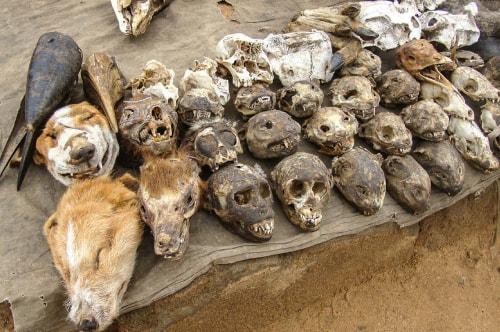 Togo -Lome-Voodoo Market (Marche' des Feticheurs Akodessewa)-1349 COVER
