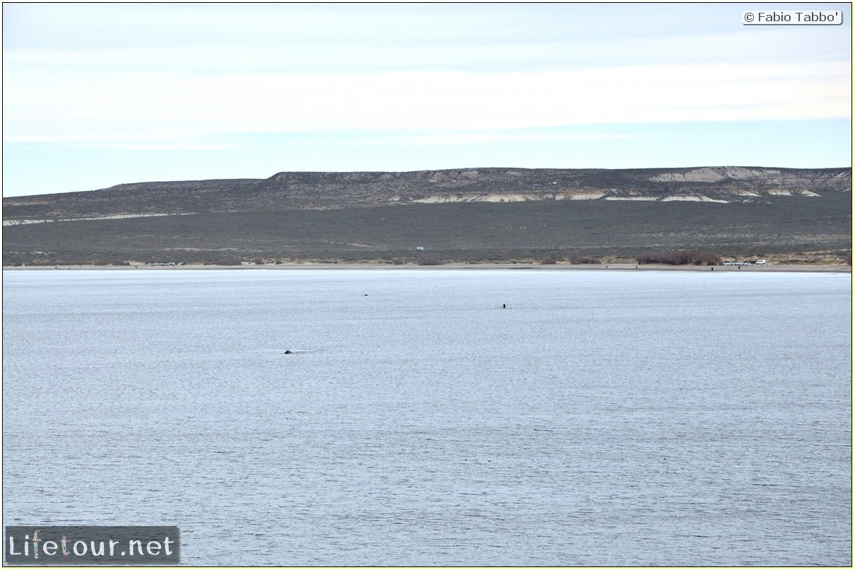 Fabios-LifeTour-Argentina-2015-July-August-Puerto-Madryn-El-Doradillo-whale-watching-2.-El-Doradillo-whale-watching-1963