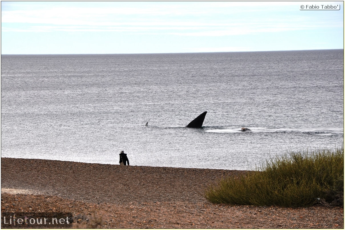 Fabios-LifeTour-Argentina-2015-July-August-Puerto-Madryn-El-Doradillo-whale-watching-5372-cover-2