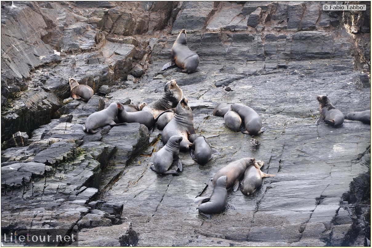 Fabios-LifeTour-Argentina-2015-July-August-Ushuaia-Beagle-Channel-2-Sea-lions-7800