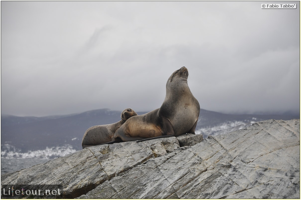 Fabios-LifeTour-Argentina-2015-July-August-Ushuaia-Beagle-Channel-2-Sea-lions-8957-cover