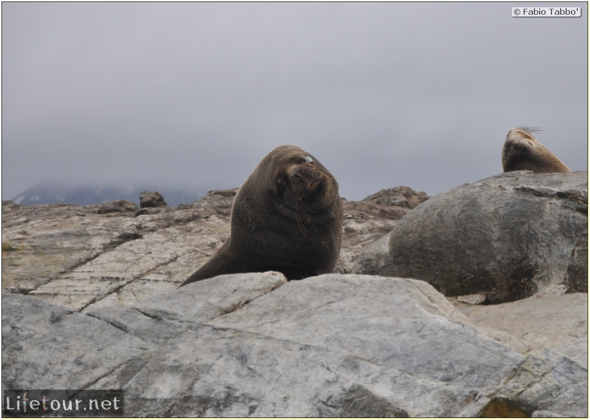 Fabios-LifeTour-Argentina-2015-July-August-Ushuaia-Beagle-Channel-2-Sea-lions-9102-cover-1