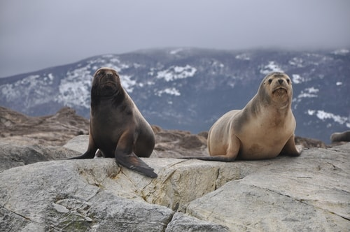 Fabios-LifeTour-Argentina-2015-July-August-Ushuaia-Beagle-Channel-2-Sea-lions-9199-cover-1