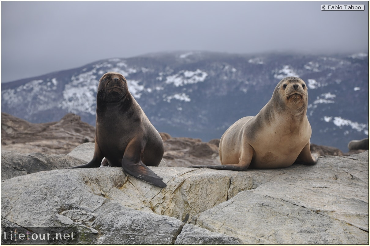 Fabios-LifeTour-Argentina-2015-July-August-Ushuaia-Beagle-Channel-2-Sea-lions-9199-cover-2