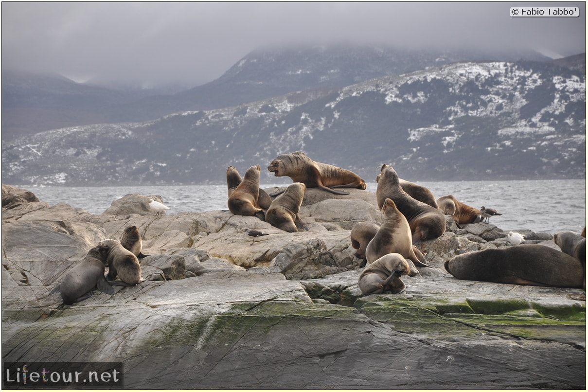 Fabios-LifeTour-Argentina-2015-July-August-Ushuaia-Beagle-Channel-2-Sea-lions-9411-cover-1