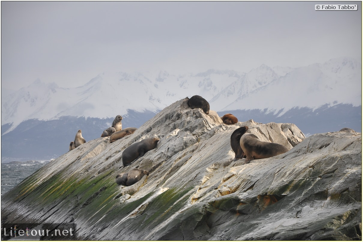 Fabios-LifeTour-Argentina-2015-July-August-Ushuaia-Beagle-Channel-2-Sea-lions-9623-cover