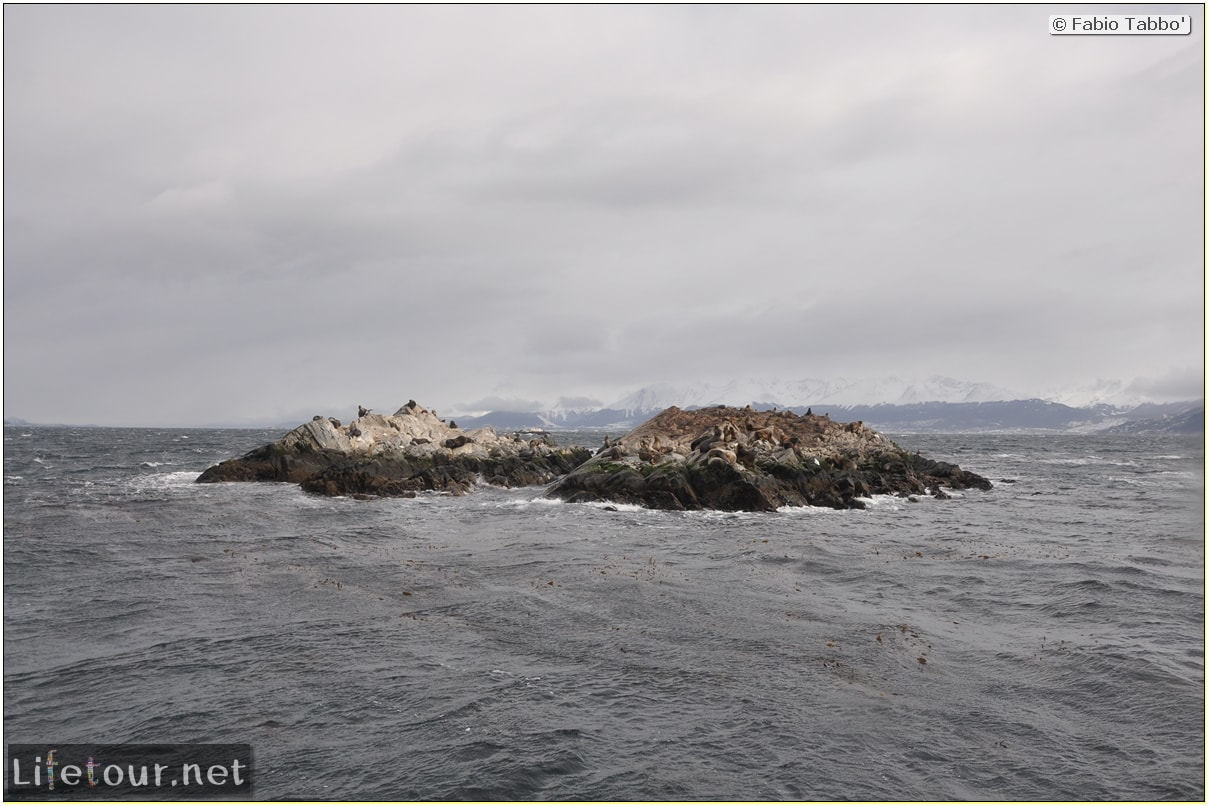 Fabios-LifeTour-Argentina-2015-July-August-Ushuaia-Beagle-Channel-2-Sea-lions-9923