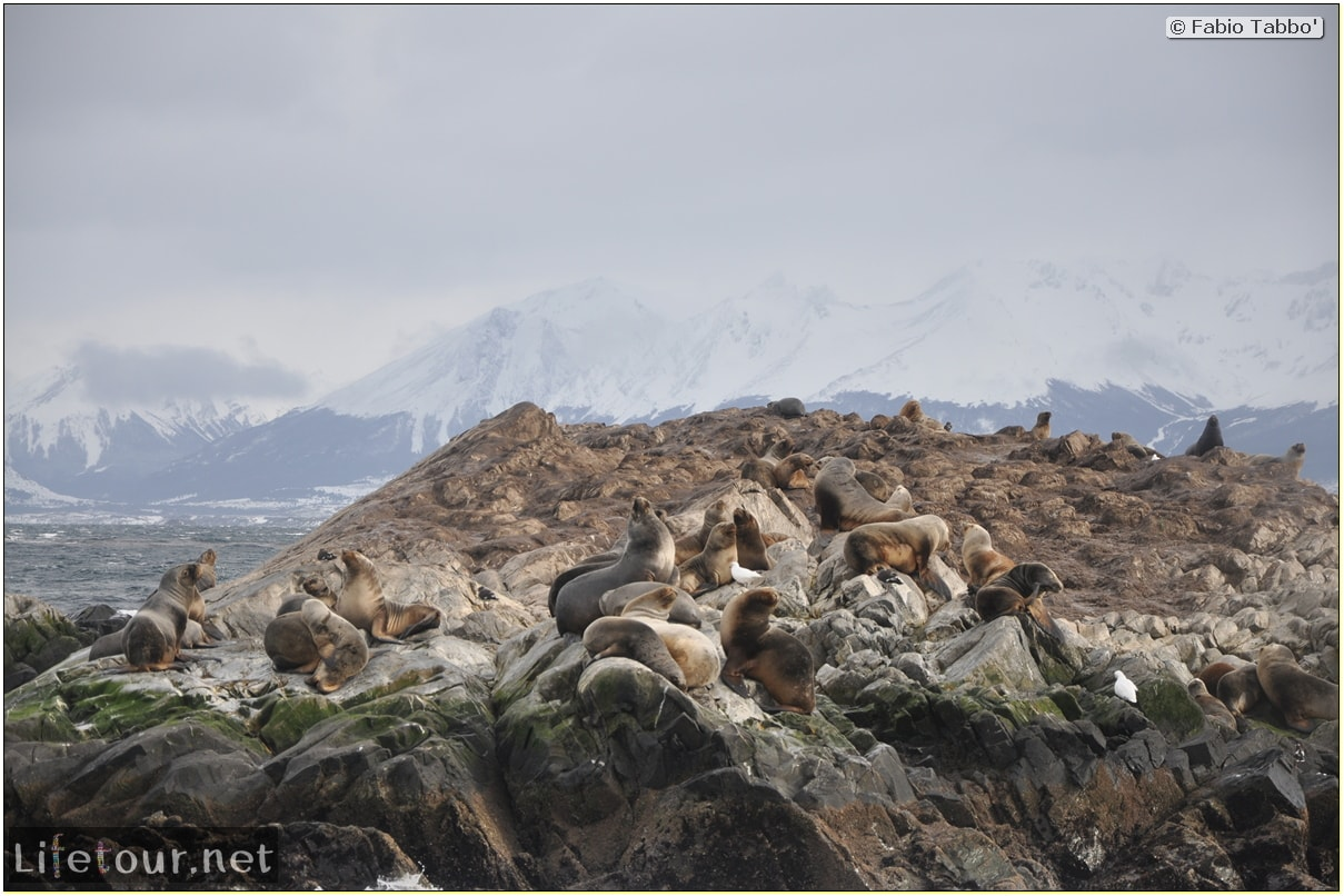 Fabios-LifeTour-Argentina-2015-July-August-Ushuaia-Beagle-Channel-2-Sea-lions-9967