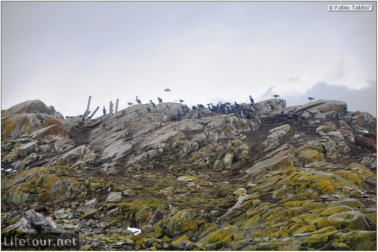 Fabios-LifeTour-Argentina-2015-July-August-Ushuaia-Beagle-Channel-3-Cormorants-10339