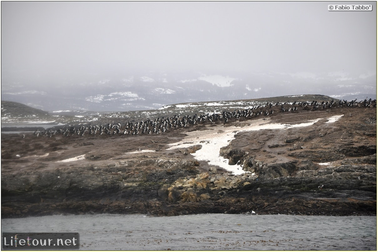 Fabios-LifeTour-Argentina-2015-July-August-Ushuaia-Beagle-Channel-3-Cormorants-3212