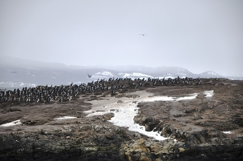 Fabios-LifeTour-Argentina-2015-July-August-Ushuaia-Beagle-Channel-3-Cormorants-3466-cover-1